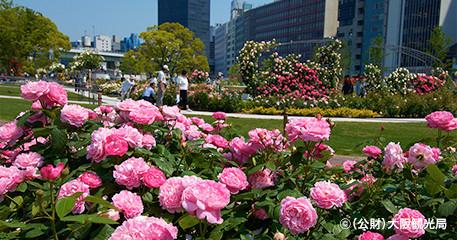 中之島公園~バラ~|花の京阪沿線をめぐる|おすすめ ...