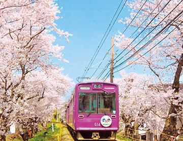 嵐電(京福電車)桜のトンネル(らんでんさくらのとんねるのさくら)