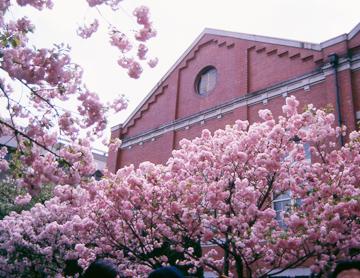 造幣局 桜の通り抜けの混雑状況や通行可能時間は?入場料や日程も【2021】