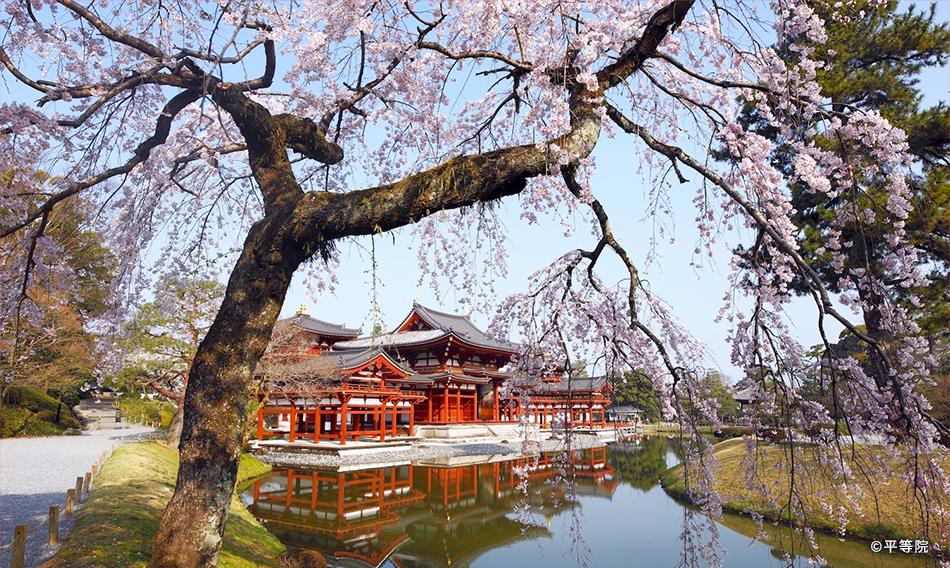京都・大阪・滋賀 京阪沿線桜特集2019|おすすめ!|沿線おでかけ情報 ...